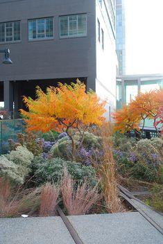 High Line, landscaping, landscape, hardscape, fall foliage
