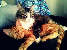 Mårten & Melvin