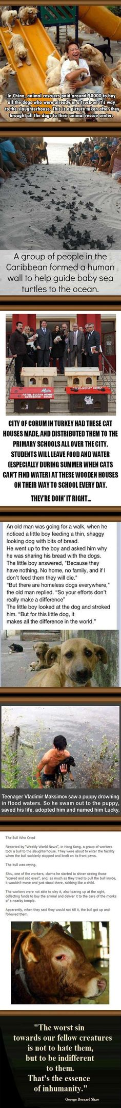 Animal Rescue : Faith in humanity Restored
