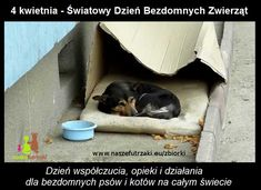 A cardboard box was the only place this dog felt safe while he lived on the streets. The dog in Romania was invisible to everyone that walked by until one day, some people took notice of Buzu and rescued him off the streets and he got new start. Animal Graphic, Homeless Dogs, Pet Day, Stop Animal Cruelty, All Gods Creatures, Stray Dog, Losing A Pet, All Dogs, Beautiful Dogs