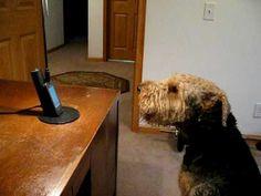Este perro recibe una llamada de una persona especial. Espera ver lo que sucede después.