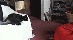 Quand mon chat sentraîne à retomber sur ses pattes Gif