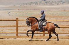 caballos vaqueros: Calentamiento del caballo de doma vaquera