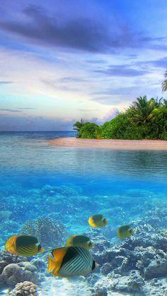 120 Backgrounds For iPhone - Desktop backgrounds Natur Wallpaper, Ocean Wallpaper, Underwater Photography, Landscape Photography, Nature Photography, Hd Cool Wallpapers, Tropical Beaches, Beaches In The World, Ocean Life