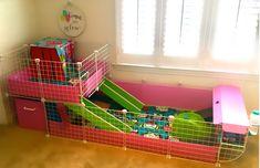 Guinea Pigs, Pig Ideas, Home Appliances, Animals, Dogs, House Appliances, Animales, Animaux, Appliances
