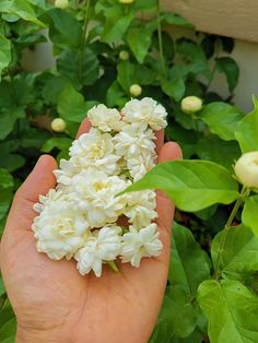 Jasmine, Different Types Of Flowers, Cut Flowers, Kerala, Flora, Girls, Plants, Dress, Outfits