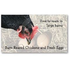 Barn reared chicken eggs business card with the head of a black hen looking over two brown eggs.