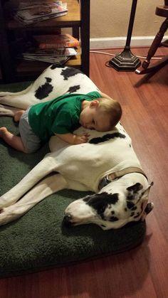 Boy with Dog via Amplification, Inc. social media marketing agency http://amplificationinc.com/