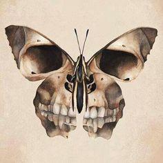 Skull Butterfly.