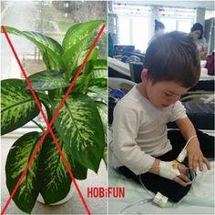 Birçok Evde Bulunan Bu Bitki Yüzünden Çocuğu Ölümle Burun Buruna Gelen Anne Tüm Ebeveynleri Uyarıyor