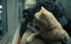 What's Really Going On With the Cat in Inside Llewyn Davis: A Theory - Tim Wainwright - The Atlantic