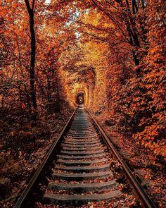 "@autumncabin on Instagram: ""🖤🍂☕️ • • • • • • • • • • • • *no photos are mine unless stated* #halloween #100daysofhalloween #365daysofhalloween #happyhalloween…"""