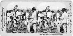 aking time on a sugar plantation, una imagen de Keystone View Co. en Puerto Rico en 1900.