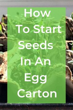 Whether you are a novice or avid gardener or want to teach your child some great lessons about being green and sustainable, growing and starting seeds in an egg carton is super quick and easy! It's a great way to kick off the warmer spring days! Garden Seeds, Planting Seeds, Garden Plants, Diy Drum Shade, Seed Bombs, Seed Catalogs, Seed Paper, Organic Seeds, Wildflower Seeds