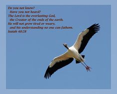 From Daily Scripture Project by artist Dawn Currie:   Do you not know? Have you not heard? The Lord is the everlasting God, the Creator of the ends of the earth. He will not grow tired or weary, and his understanding no one can fathom. Isaiah 40:28   Photograph of a Wood Stork soaring in the sky in St Augustine Florida. Personalized cards and prints available #scripture #christianart #biblequotes #inspirational #bird #birdart