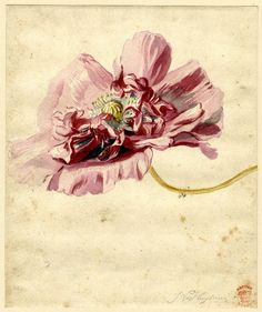 Flower, by Jan van Huysum (Dutch, 1682-1749)
