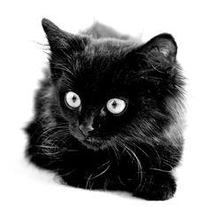 Black Kitten..focus © sue golden