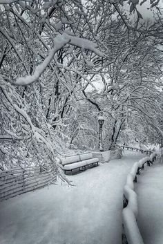 Central Park, NYC!