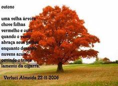 https://www.facebook.com/VerluciAlmeidaPoesias   <3 OUTONO