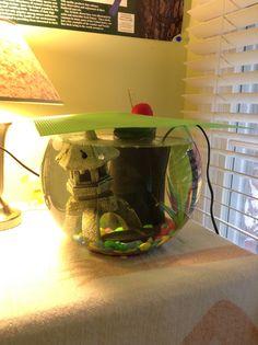 My betta fish hummingbird on pinterest lantern for Fish bowl heater