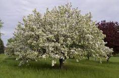 Image result for Donald Wyman tree