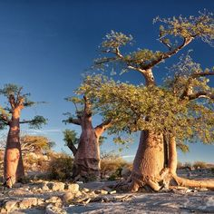 In the vast expanse of the great salt flats of Makgadikgadi in the north of the Kalahari, lies an isolated granite outcrop, some 10 meters h. Desert Island, Africa Travel, Frogs, Fossils, Travelling, Deserts, Spirit, Beach, Plants