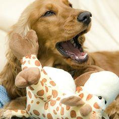Assim como nós, os cachorros também podem sofrer de mau hálito. Para que isso não aconteça você tem de escovar seus dentes! #cachorros #pets #cães #animais #dentes