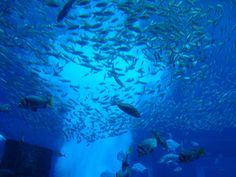 Aquarium Lost Chambers, Atlantis Hotel #dubai #travel