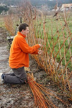 The living willow fence- In short, you take long and straight willow stems and plant then in a line in the spring (just stick them in the ground), weaving them into a desired form and tie joints together for stability for the first few years for stability (elastic is good for this, but will need to be removed eventually).
