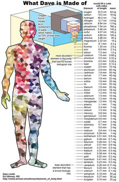 what our body is made of