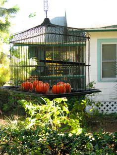 cool decoration for back yard pergola area