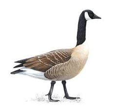 are canada goose jackets made of geese