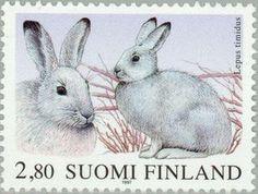 ◇Finland  1997    Alpine hare (Lepus timidus)