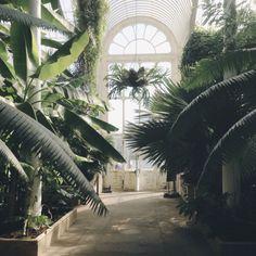 greenery // HAATI CHAI