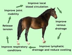 Horse Laughing Animal Therapy Pinterest Equine Massage Therapy