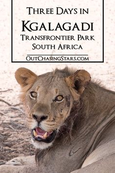 A highlight of our time in South Africa, we spent three nights at !Xaus Lodge to explore the Kgalagadi Transfrontier Park.  OutChasingStars.com