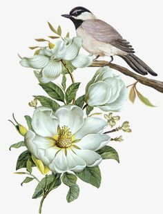 """""""Carolina Chickadee and Magnolia Flower"""" art by Walter Colvin features a digital art painting of a chickadee standing among white magnolia flowers. Illustration Botanique, Illustration Blume, Nature Illustration, Watercolor Flower Background, Watercolor Paintings, Splash Watercolor, Plants Watercolor, Watercolor Border, Watercolor Splatter"""