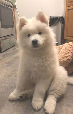 SAMOYED embroidered Challenger jacket ANY COLOR B