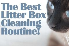 The Best Litter Box Cleaning Routine