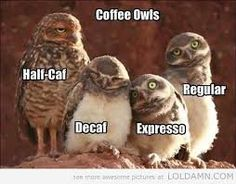 funny owl quotes - Google Search