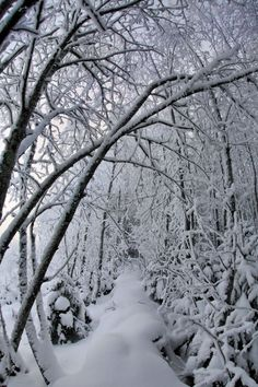 How could I not Pin this during our Blizzard!!!  I love snow on tree branches, so pretty.