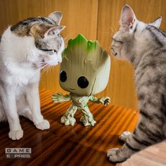 Avengers Guardians of the Galaxy Marvel groot hry, oblečenie a predmety Star Lord, Guardians Of The Galaxy, Marvel Avengers, Loki, Cats, Animals, Gatos, Animales, Animaux