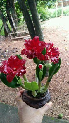 Unusual Plants, Exotic Plants, Exotic Flowers, Amazing Flowers, Beautiful Flowers, Cattleya Orchid, Dendrobium Orchids, Orchids Garden, Orchid Plants