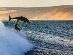 Breaching dolphins show Australian surfer who really masters the waves   GrindTV.com