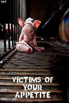 """Victims of Your Appetite."" RIP little Piglets."