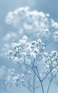 Images By M Verneau On Flowers And Gardens | Blue Flower