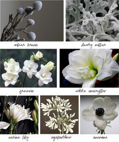 White Flowers-guide
