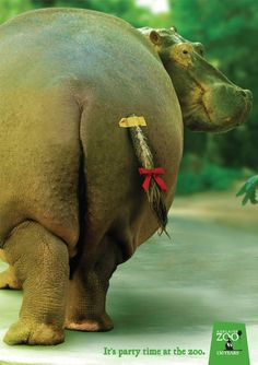 """Adelaide Zoo: 130th Birthday  