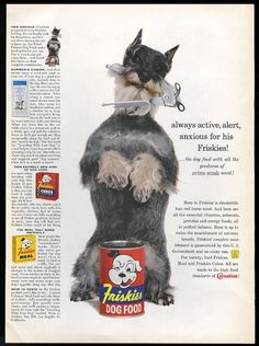 1958 miniature schnauzer photo Friskies dog food vintage print ad ie.picclick.com