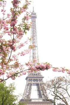 Paris Photography, Eiffel Tower Paris Je t'aime, Paris in the Springtime, Pink Cherry Blossoms, Paris Home Decor - Blush Pink by rebeccaplotnick on Etsy https://www.etsy.com/listing/225621842/paris-photography-eiffel-tower-paris-je